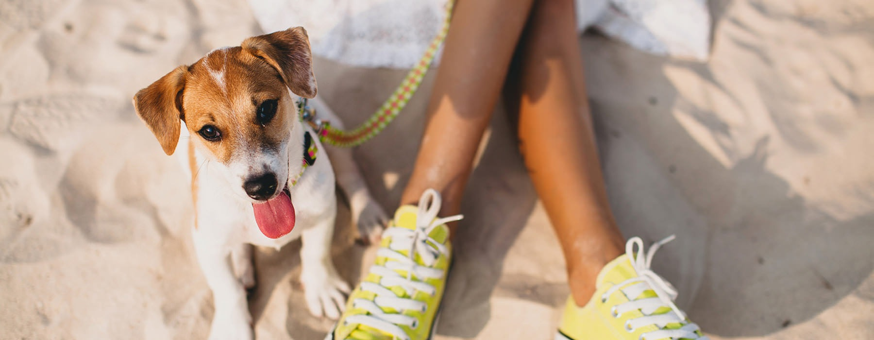doggie on a leash sits in the sand next to his master in sneakers